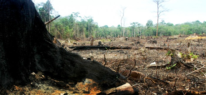 The Facts – Palm Oil Action Australia