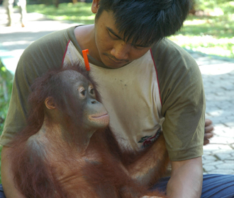 Palm Oil Action - Rescue