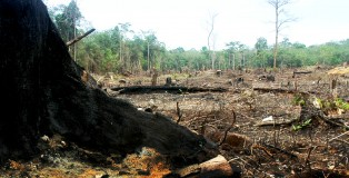 Effects of palm oil deforestation